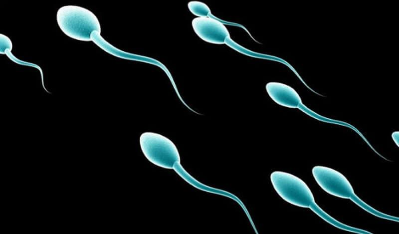 tinh trùng có chứa adn